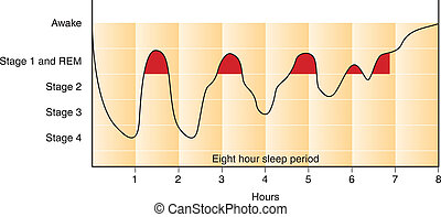 グラフ, 睡眠, 周期