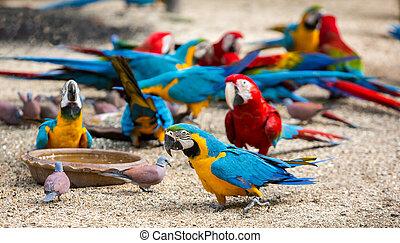 グループ, ひまわり, 食べること, seeds., カラフルである, macaws