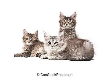 グループ, 3, 子ネコ