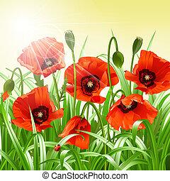 ケシ, ベクトル, 赤, grass.