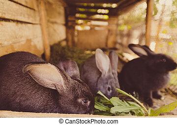 ケージ, ウサギ, たくさん, farm.