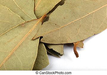 ゲッケイジュの葉