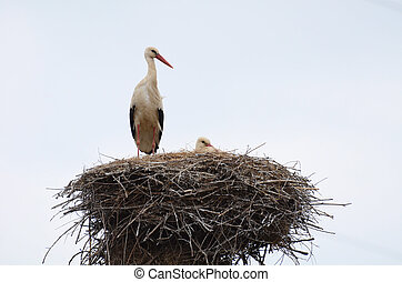 コウノトリ, 巣