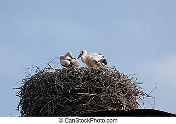 コウノトリ, 赤ん坊, 巣, 白, 鳥