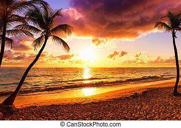 ココナッツ, カラフルである, 木, やし, に対して, 日没