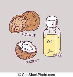 ココナッツ, セット, くるみ, ベクトル, 治癒, オイル