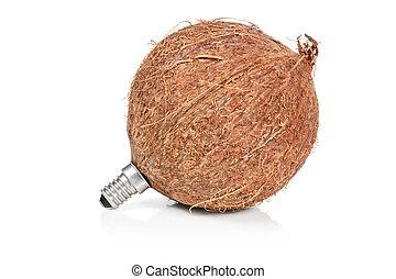 ココナッツ, ランプ, ソケット