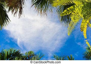 ココナッツ 木, フレーム