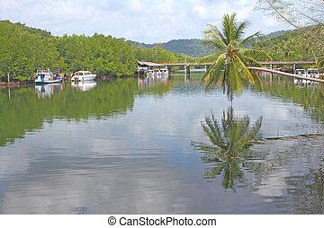 ココナッツ 木, 中に, 川