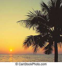 ココナッツ 木, 効果, フィルター, やし, レトロ, 日の出
