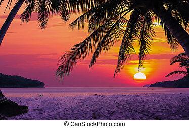 ココナッツ 木, silhouetted
