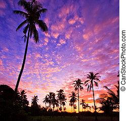 ココナッツ 木, silhouetted, 光景