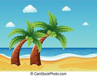 ココナッツ, 浜 場面, 木