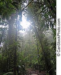 コスタリカ, rainforest