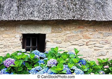 コテッジ, thatched, hydrangeas