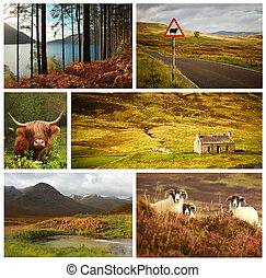 コラージュ, スコットランド