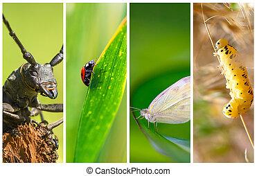 コラージュ, 写真, 別, 種類, 昆虫