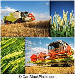 コラージュ, -, 収穫, 小麦