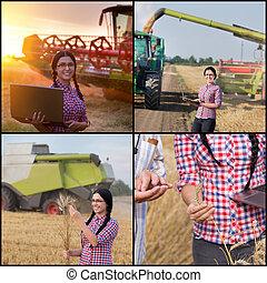 コラージュ, 大麦, 収穫する