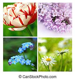 コラージュ, 美しい, 花, 春