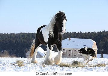 コリー, すてきである, ボーダー, 馬, 遊び