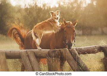 コリー, ボーダー, 馬, 赤い犬