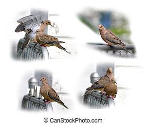 コレクション, の, カメ, 鳩, 隔離された, 白, 背景