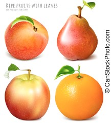 コレクション, の, 新たに, 熟した, fruits.