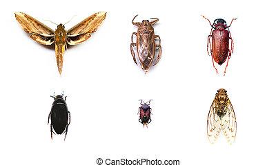 コレクション, の, 昆虫, 上に, 隔離された, 白, バックグラウンド。