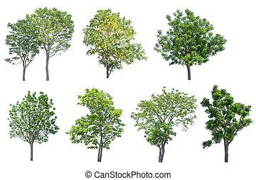 コレクション, の, 木, 隔離された, 白, 背景