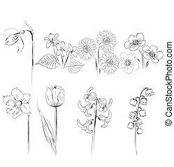 コレクション, の, 花, スケッチ
