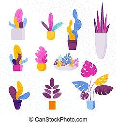 コレクション, の, 装飾用である, エキゾチック, トロピカル, houseplants, 中に, a, 花 鍋
