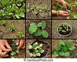 コレクション, 実生植物