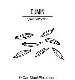 コレクション, cumin, 手, 種, 引かれる, スパイス