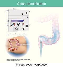 コロン, detoxification