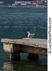 コンクリート, かもめ, 海, 背景, ドック