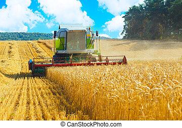 コンバイン収穫人