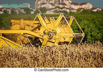 コンバイン, 小麦, 収穫する