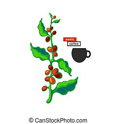 コーヒー木, bean., シンボル。, bio, 飲みなさい, 明るい, ベクトル