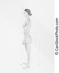 サイド光景, 解剖, 女性, 裸である, 鉛筆図画