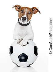 サッカー, 白いボール, 犬
