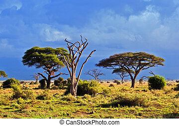 サバンナ, アフリカ, kenya, 風景, amboseli