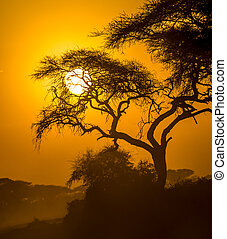 サバンナ, 日没, アフリカ