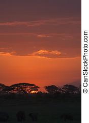 サバンナ, nightlife., amboseli, kenya
