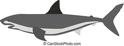 サメ, イラスト, 白, ベクトル, バックグラウンド。