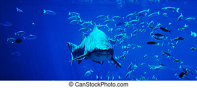 サメ, 斑点を付けること