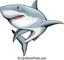 サメ, 白, 隔離された, 背景