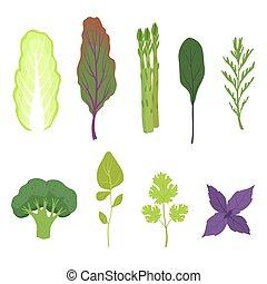 サラダ緑, セット, 葉, 料理, 健康, 芳香がする, ハーブ, ベクトル, 菜食主義者, 背景, イラスト, 新たに, 白, 葉が多い野菜