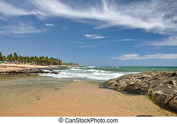 サルバドール, de, praia, forte, (brazil), 浜, bahia