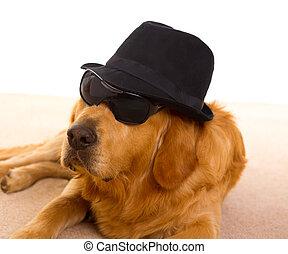 サングラス, 犬, ギャング, 黒, マフィア, 帽子